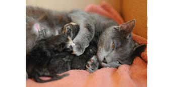 Katė su kačiukais
