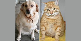 Gyvūnų nutukimas. Tiksinti sveikatos bomba ar dėmesio nevertas simptomas?