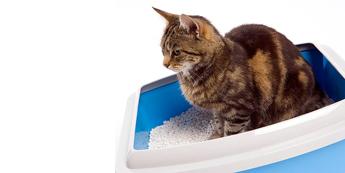 Kačių pratinimas prie kraiko dėžutės