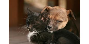 Labiausiai paplitę mitai apie šunis ir kates