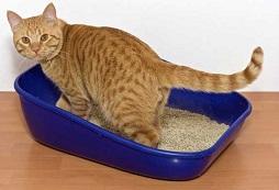 Kačių idiopatinis cistitas